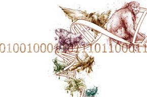 A estrutura matemática do DNA