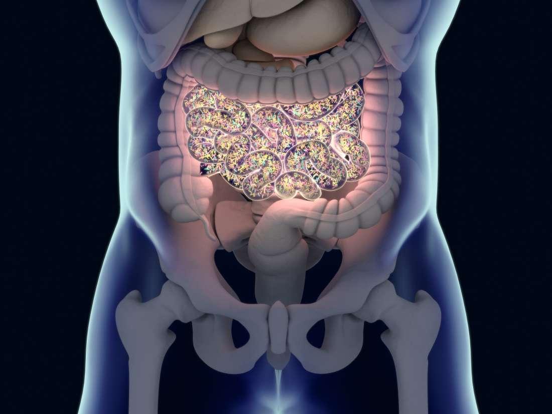 Diabetes Tipo 1: O Intestino é a Chave para a Prevenção?