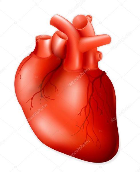 Perder 10% do Peso Corporal Alivia a Arritmia Cardíaca e Melhora a Saúde