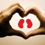 Dia Mundial do Rim conscientiza população sobre cuidados com a saúde