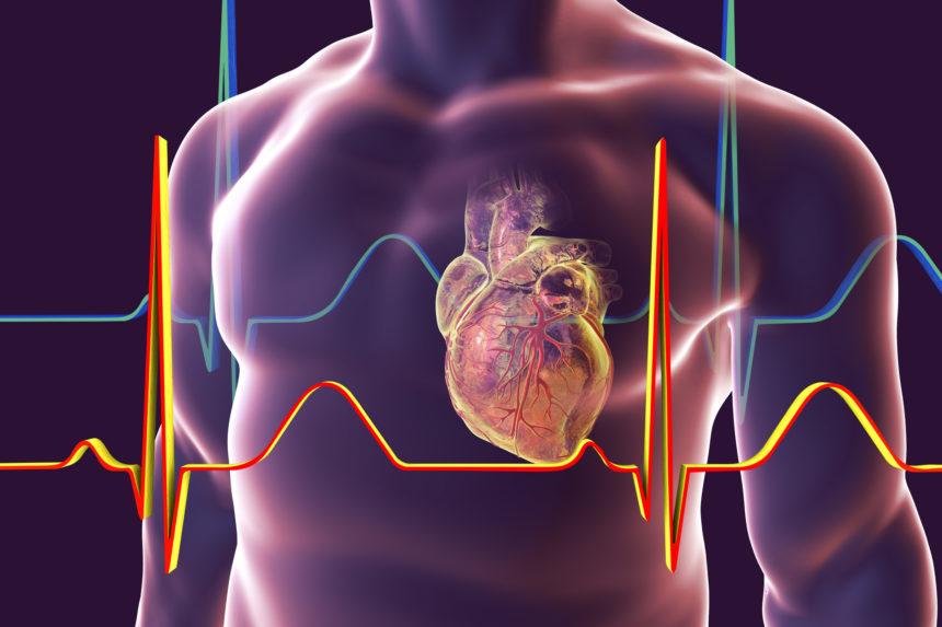 Exercício Melhora Função Cardíaca no Diabetes, Enquanto Dieta Reverte a Condição