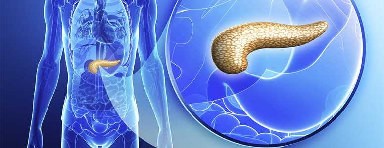 Pesquisadores Mantêm Células Doadoras de Pâncreas Vivas Para Ajudar Futuros Tratamentos Para Diabetes